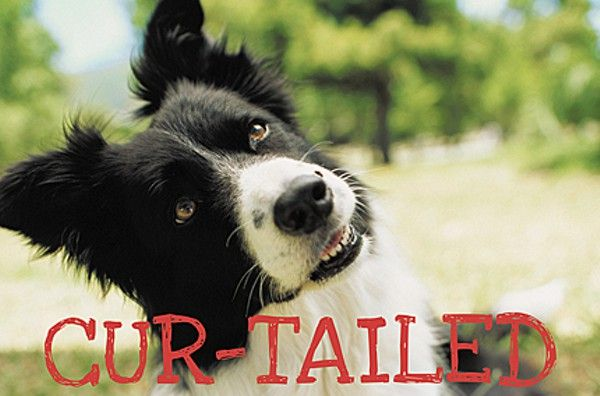 New Orleans' dog park plan