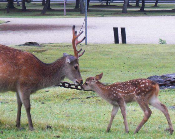 奈良 鹿 | なら散策日記【鹿と亀と猫と犬の日々】