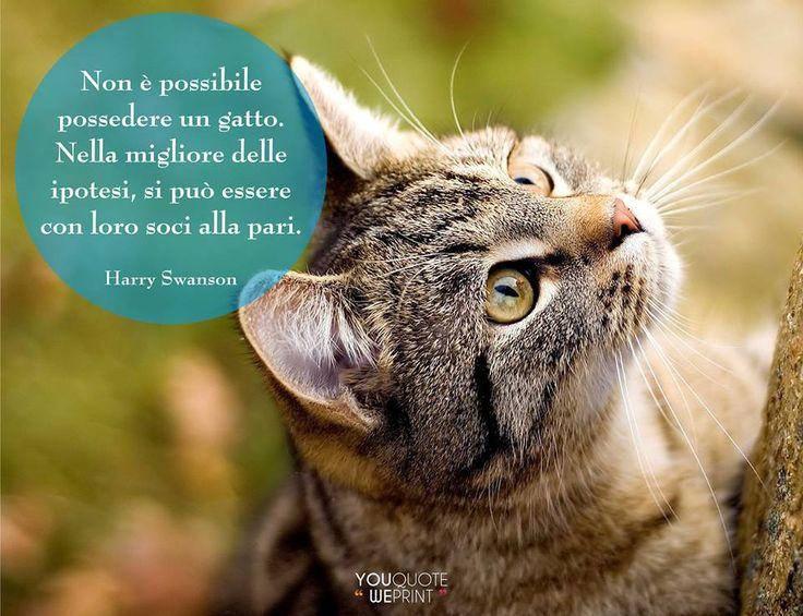 Il 17 febbraio si celebra la Festa nazionale del #gatto. Ecco la nostra raccolta di frasi sui gatti. Non è possibile possedere un gatto, nella migliore delle ipotesi si può essere con loro soci alla pari.