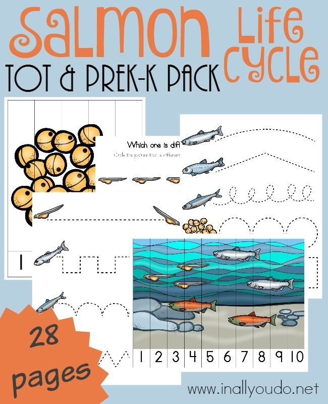 This fun-filled, activity packed Salmon Tot & PreK-K Pack is perfect for any fish unit or as a stand alone set. :: http://www.inallyoudo.net