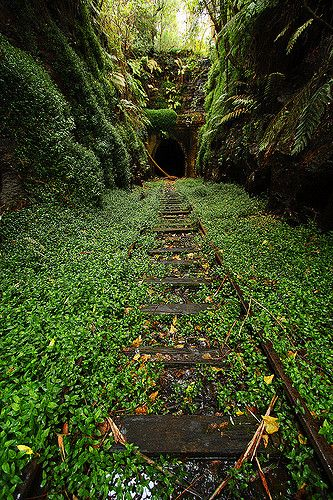 The old railway tunnel in Helensburg. Inside you can find a small colony of glowworms
