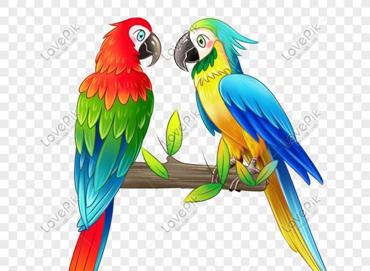 Pin Oleh Putri Nadiah Di Yang Saya Simpan Burung Warna Gambar