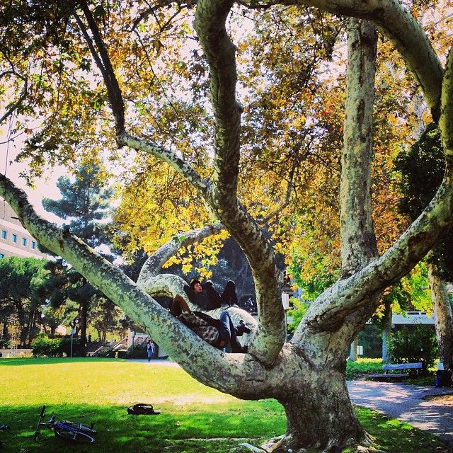 51 best UC Irvine Campus Map images on Pinterest Campus map Uc