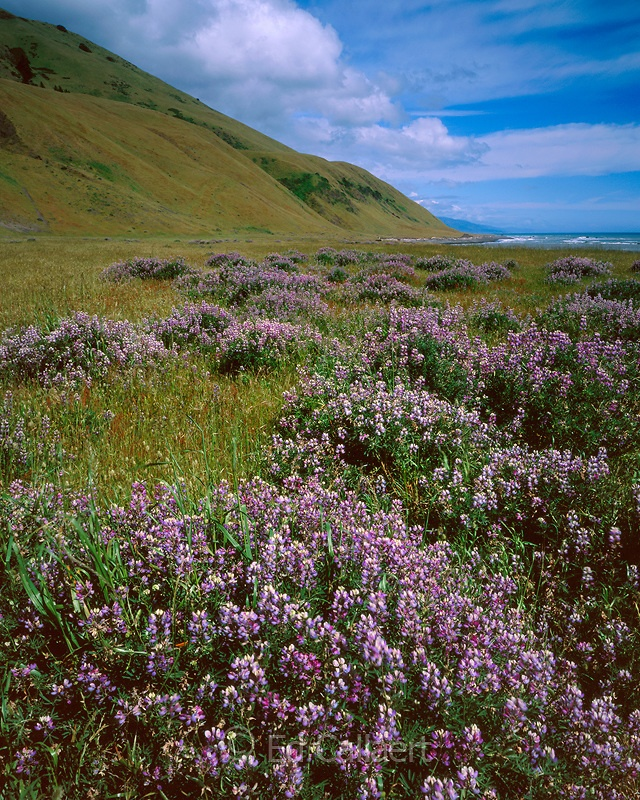 114 Best Humboldt Images Images On Pinterest: 152 Best Images About My Home