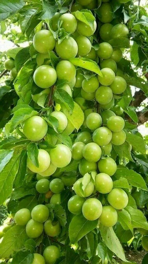 Pin Su Frutta E Verdura