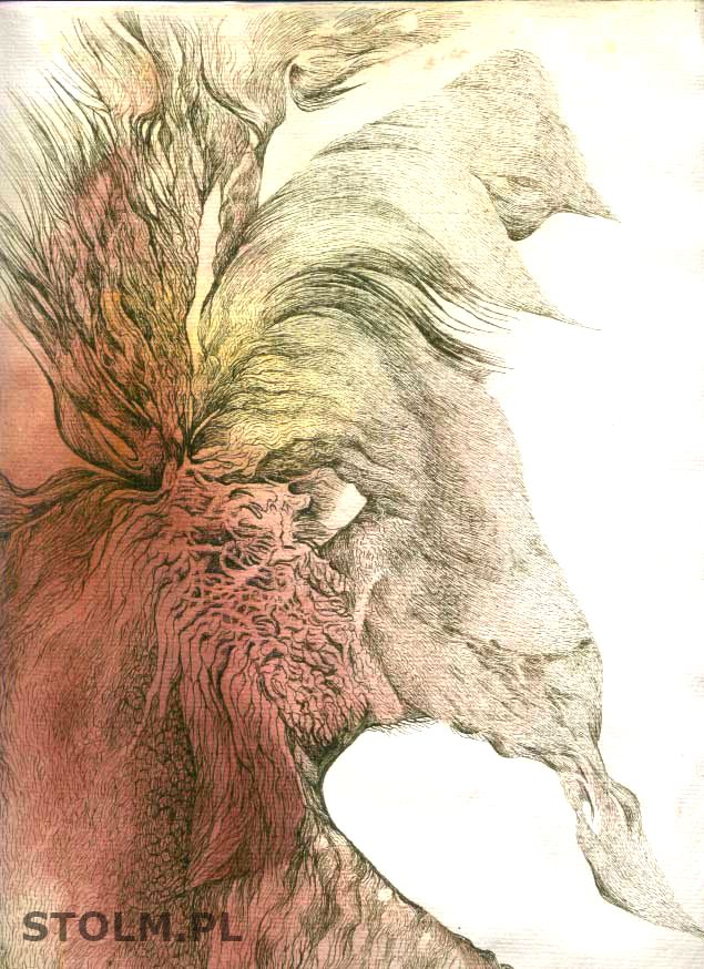 Deer ink on paper artist Stanisława Olszańska Marszałek abstraction art
