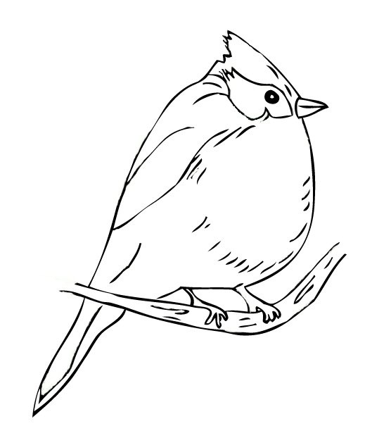 Titmouse Bird Coloring Pages