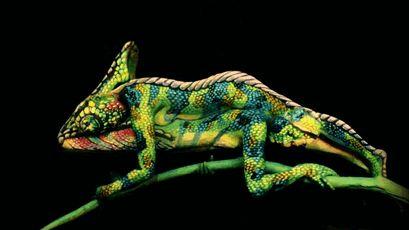 Este camaleão é na verdade duas mulheres com os corpos pintados