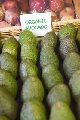 How to Care for Avocado Tree