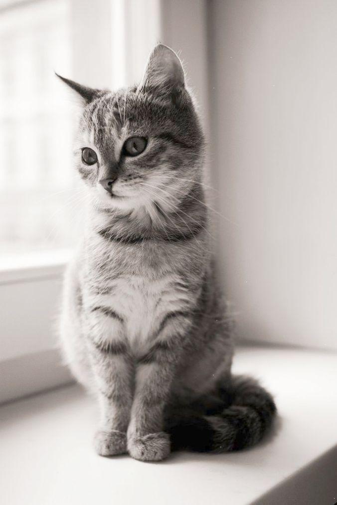 Wonderful Beautiful Cats For Sale In Karachi Nice Cute