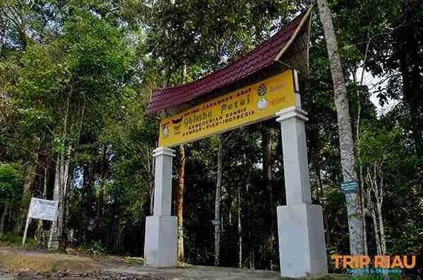Serunya Wisata Jelajah di Hutan Larangan Ghimbo Potai