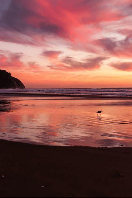bird walking on empty beach, pink purple clouds