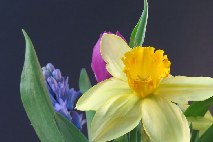 A close-up still-life of springtime flowers by blind photographer Bob