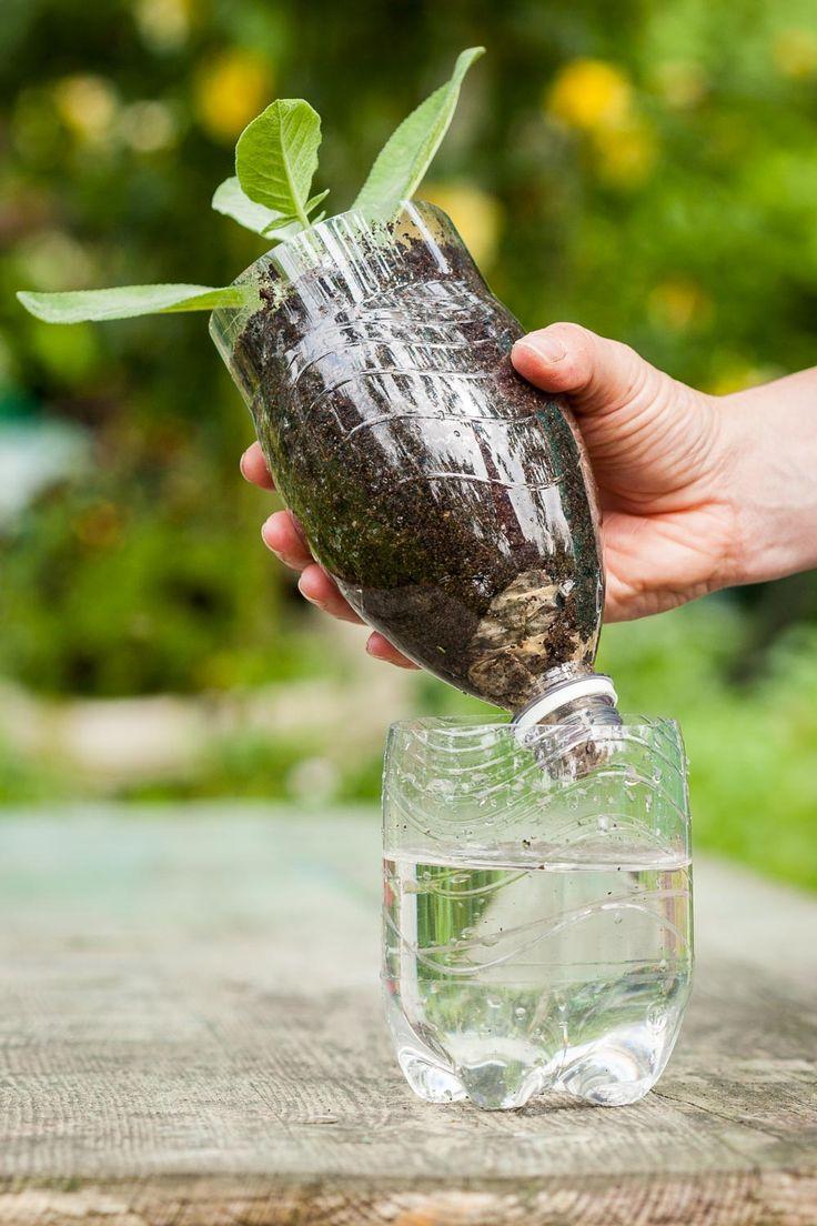 6 bew sserungs tipps f r balkon und topfpflanzen for Kleine mucken in topfpflanzen
