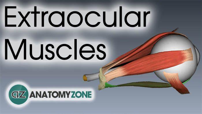 Home Anatomyzone Anatomia Del Ojo