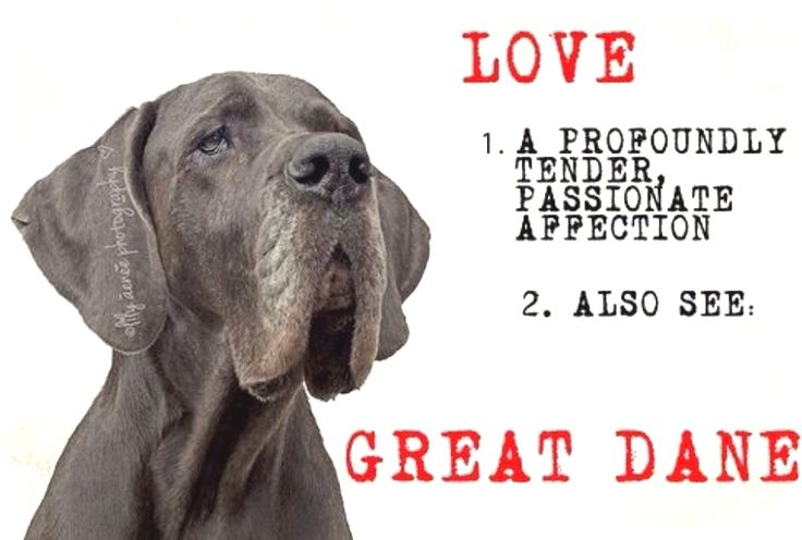 Pin By Dog Lover On Great Dane Great Dane Dogs Dane Puppies