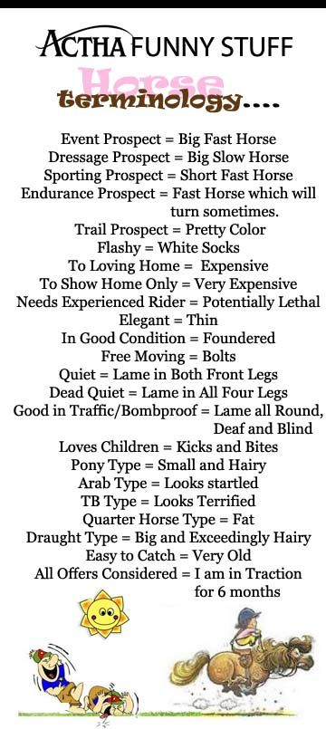 Funny horse terminology #horsechat ...Repinned with thanks by www.DressageWaikato.co.nz...
