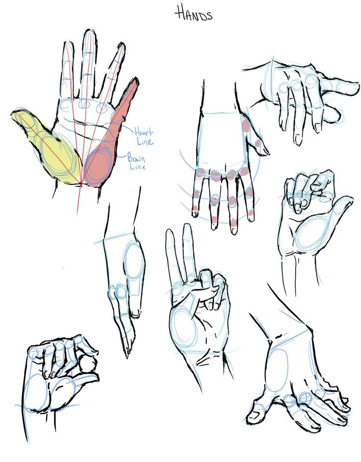 Hands Reference by *RachelLuhn on deviantART