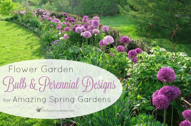 37 Best Images About Alliums On Pinterest Gardens