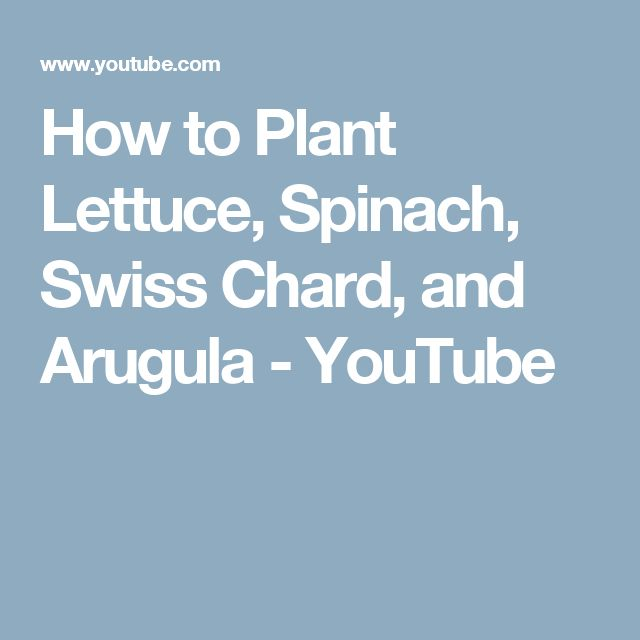 How to Plant Lettuce, Spinach, Swiss Chard, and Arugula - YouTube