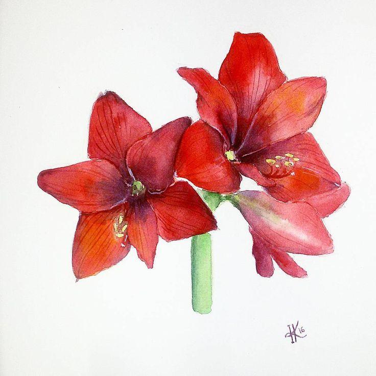 цветы ботаническая иллюстрация  botanical illustration flowers red