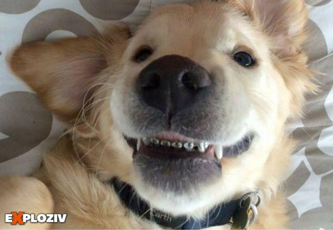 Rozkošné šteniatko Wesley očarilo internet svojím strojčekom na zuby.    Fotku šteniatka so strojčekom na zuboch zdieľala na Facebooku veterinárna klinika v Michigane, krátko po tom, ako bol retríver operovaný. Šesťmesačné šteňa začali trápiť prob...