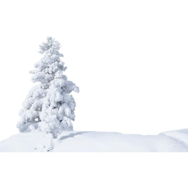 Snow Trees Png Liked On Polyvore Featuring Winter
