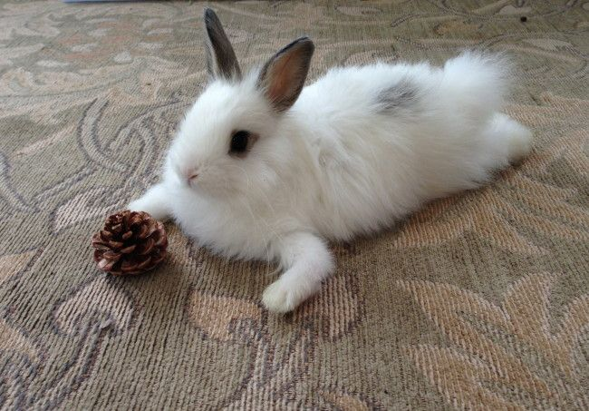 Bunny hangs out with her pinecone - August 26, 2013
