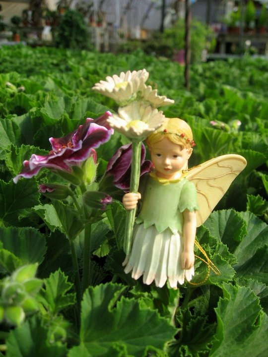 17 Best 1000 images about fairies on Pinterest Gardens Miniature