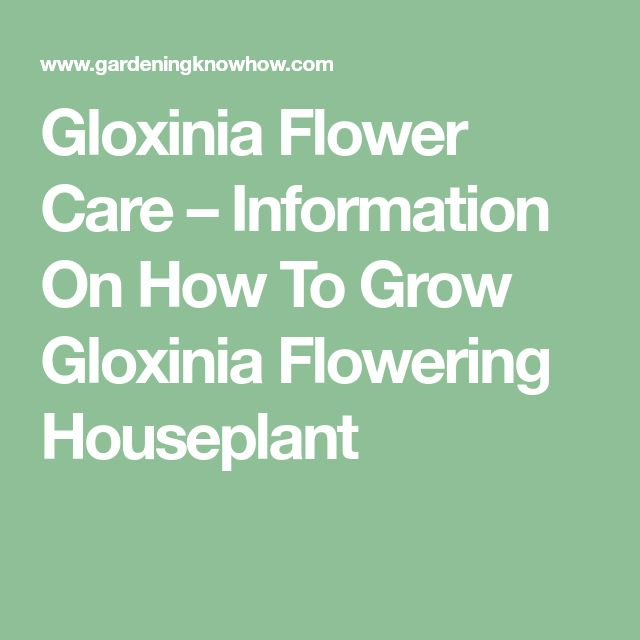 11 Best Gardening Gloxinia Images On Pinterest Violets Blossoms