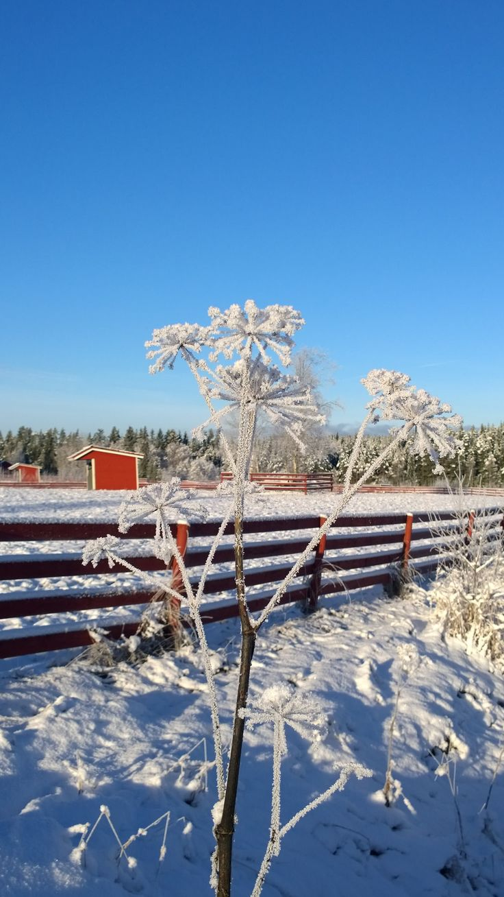 Finland countryside