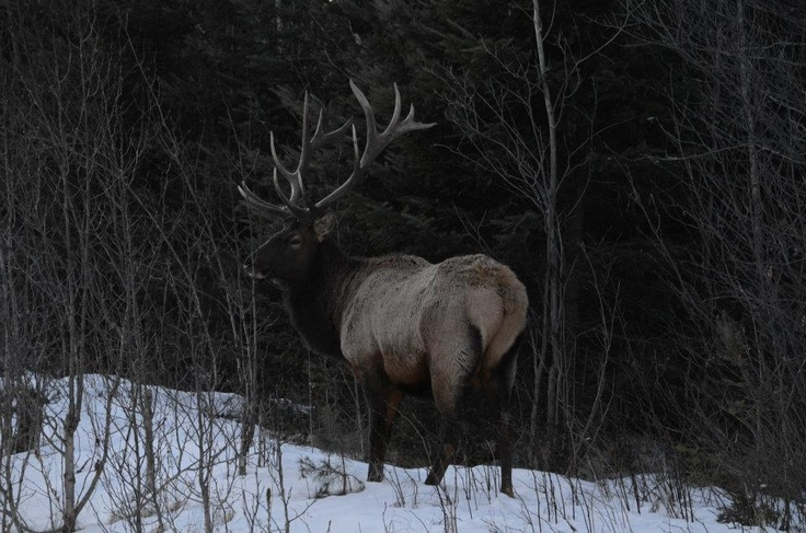 17 best images about wildlife scenery on pinterest for Deer scenery