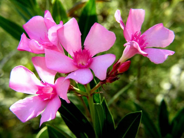 Plantas venenosas para los gatos   Cuidar de tus plantas es facilisimo.com