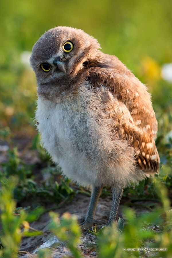 What's Up? by Derrald Farnsworth-Livingston on 500px
