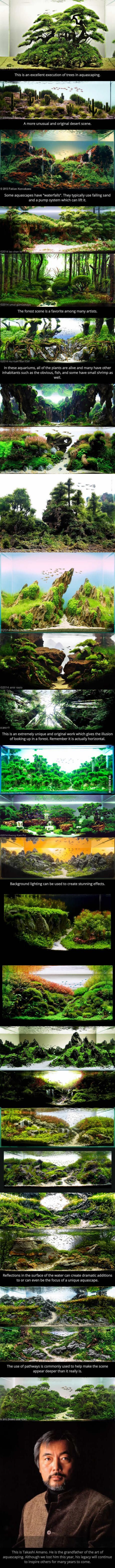 This Is The Art Aquascaping