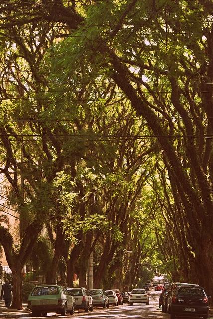 tunnel green in porto alegre/rio grande do sul