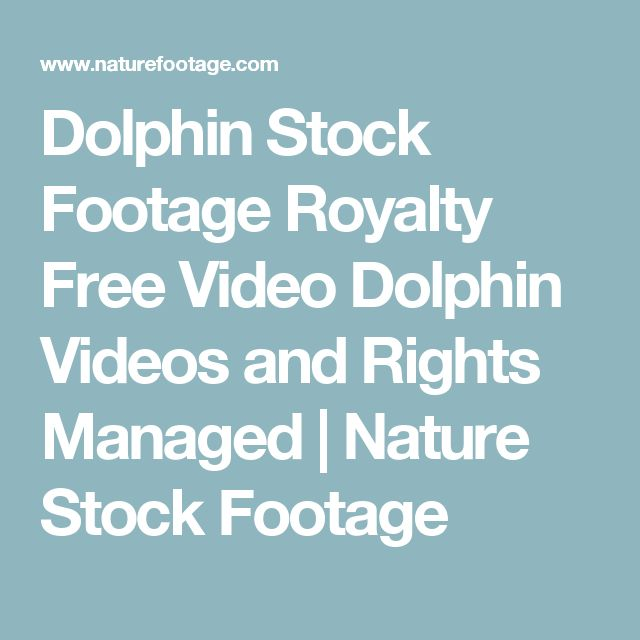 Dolphin Stock Footage Royalty Free Video Dolphin Videos and Rights Managed | Nature Stock Footage