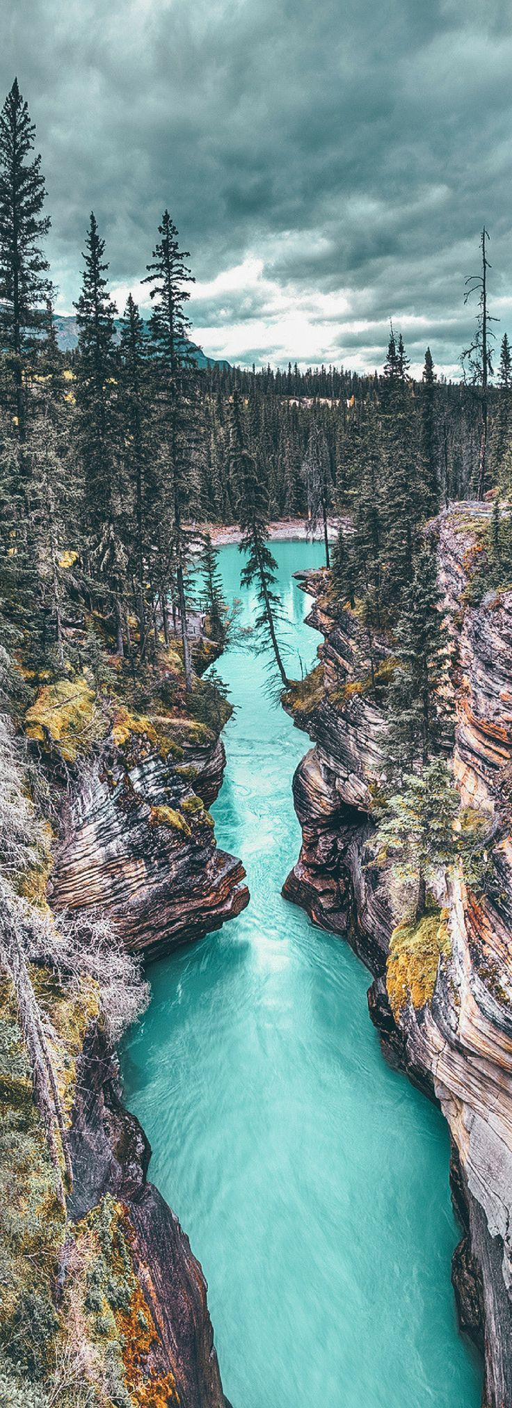 Athabasca Canyon in Jasper National Park! 10 Amazing Things To See And Do In Alberta, Canada! Including the Columbia Icefields | Banff National Park | Lake Abraham | Lake Louise | Peyto Lake and so much more! #avenlylanetravel #canada #alberta