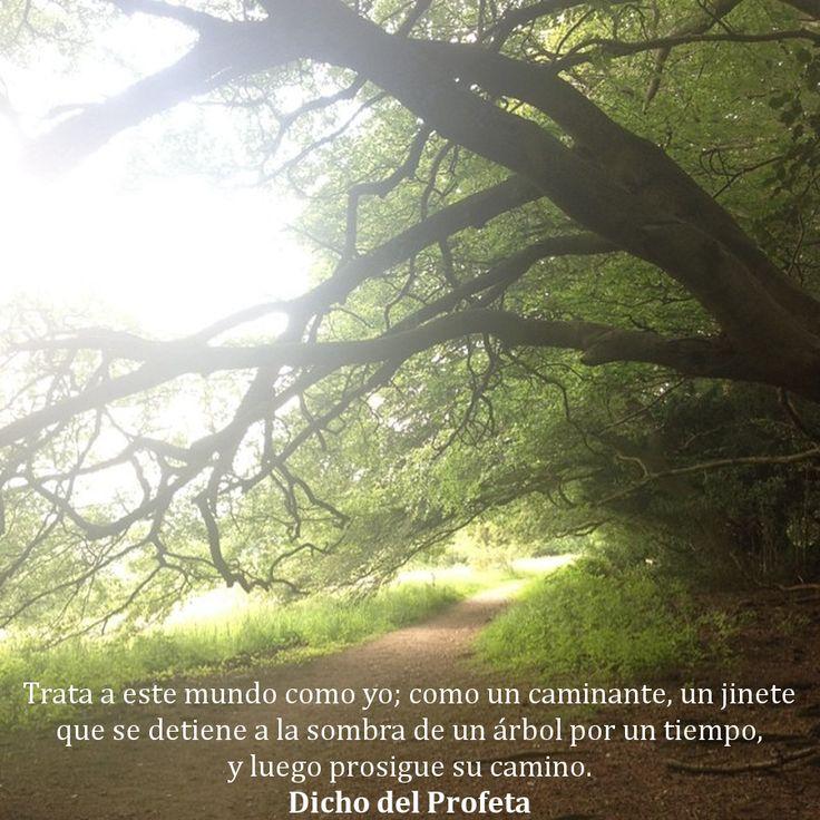 Trata a este mundo como yo; como un caminante, un jinete que se detiene a la sombra de un árbol por un tiempo, y luego prosigue su camino.  Caravana de sueños