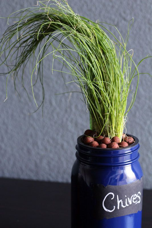 Chives DIY Hydroponic Mason Jar Herb Garden Kit by ...