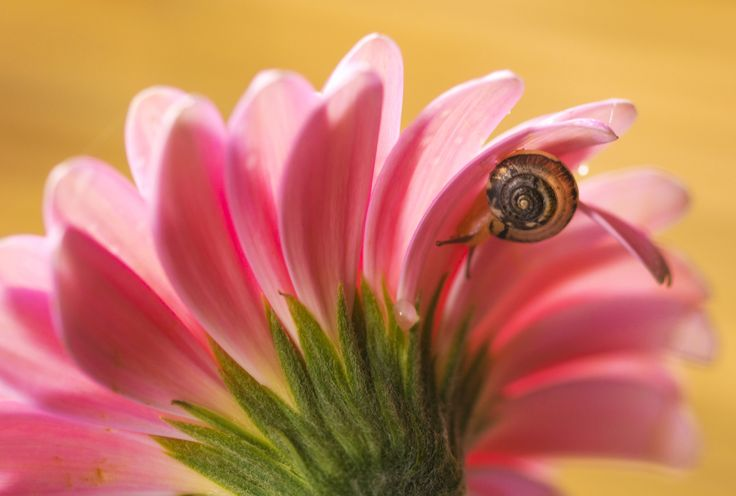 Pink daisy with snail by Nicola Di Nola on 500px