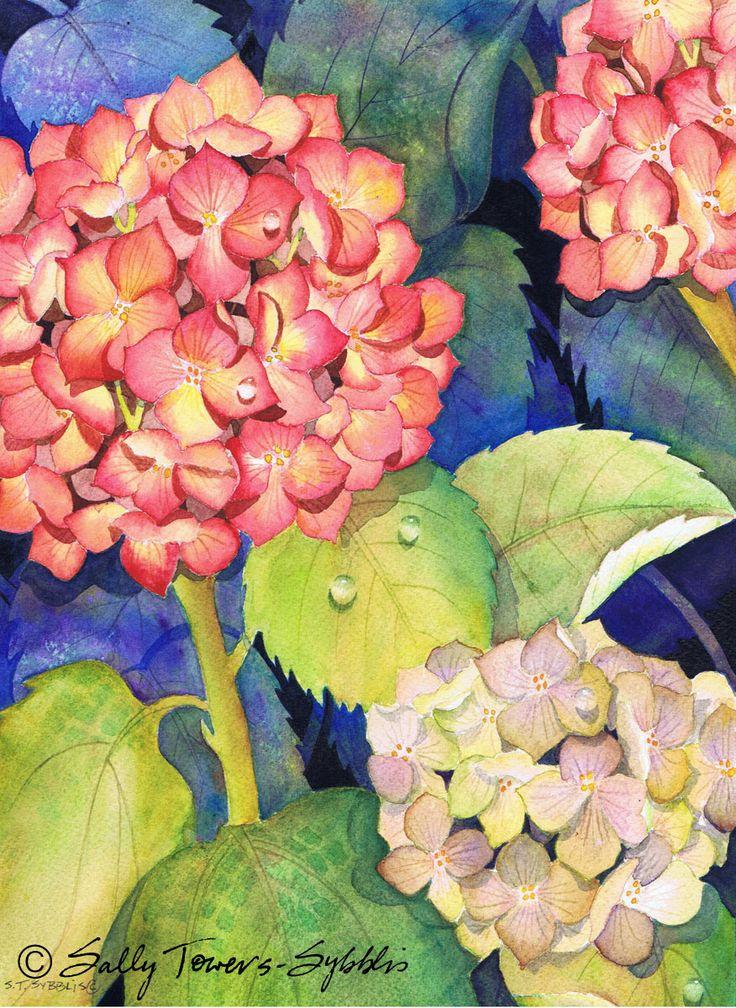 Hydrangeas watercolour print by Sally Towers-Sybblis