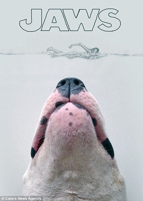 Artists Rafael Mantesso uses his bull terrier Jimmy Choo in clever sketches