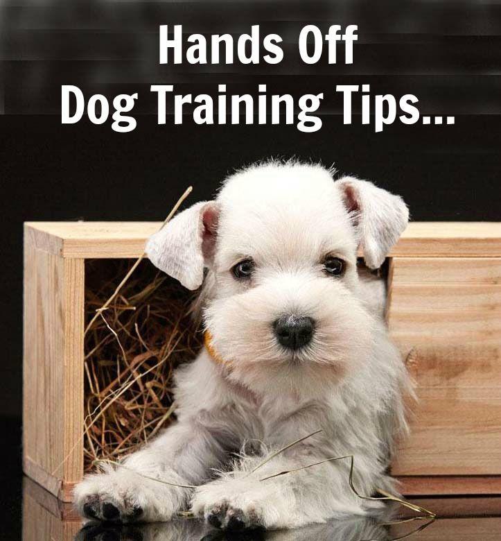 Dog Training Selby