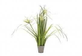 Indoor Plants | Super Amart