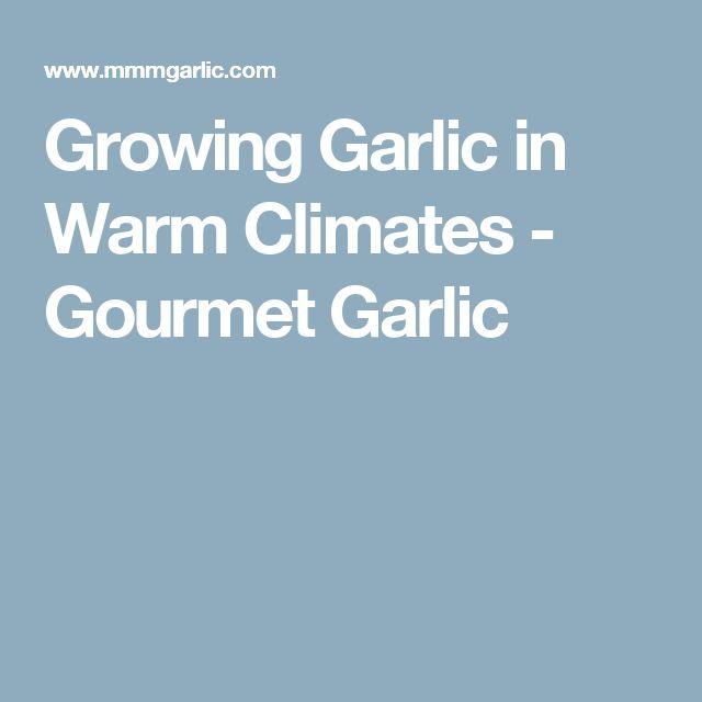 Growing Garlic in Warm Climates - Gourmet Garlic