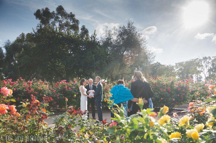 17 Best Ideas About Garden Roses Wedding On Pinterest