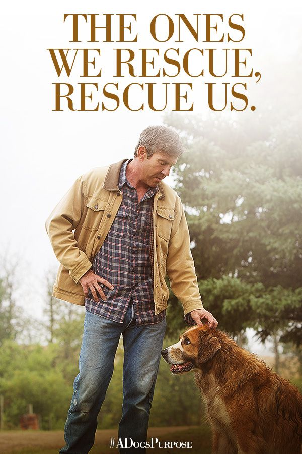 The ones we rescue, rescue us. | A Dog's Purpose | In Theaters January 27.