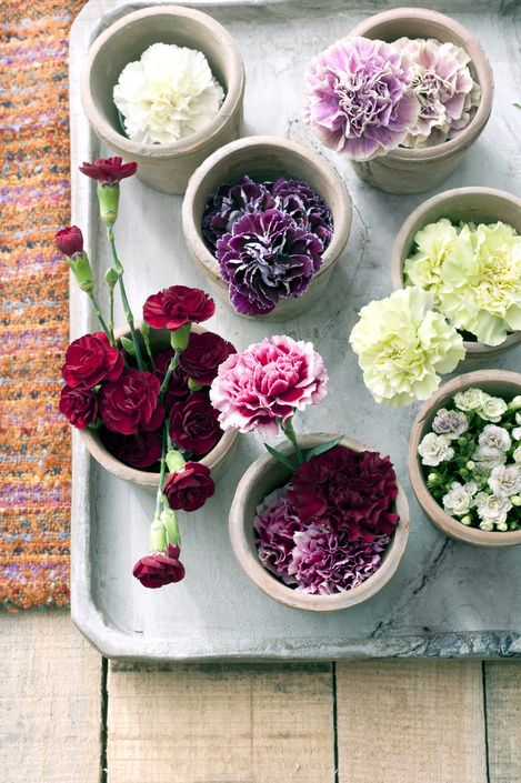 Carnations from above.