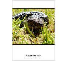 Australian Theme Wildlife Calendar Calendar